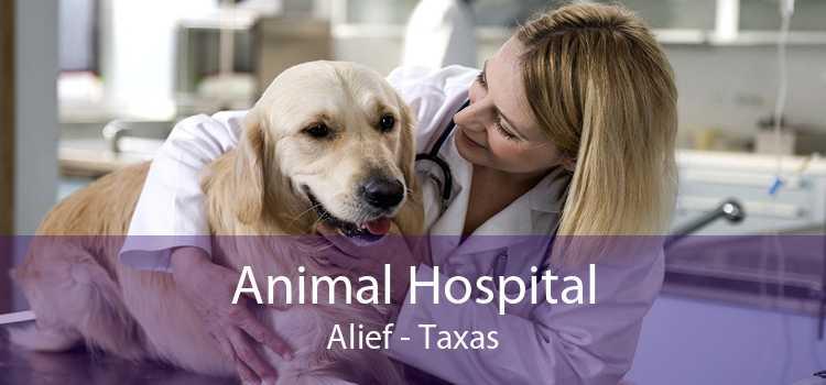 Animal Hospital Alief - Taxas