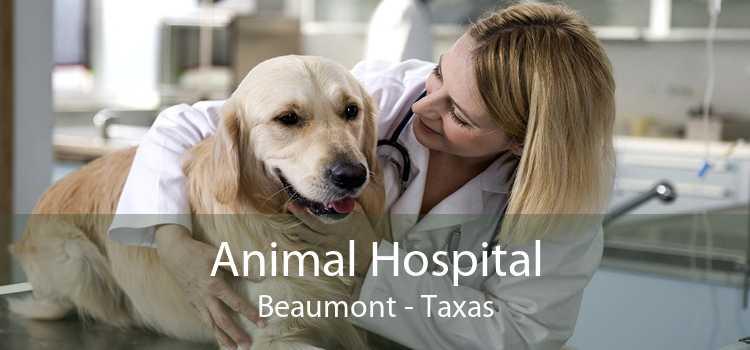 Animal Hospital Beaumont - Taxas