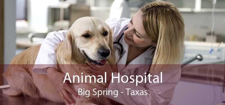 Animal Hospital Big Spring - Taxas