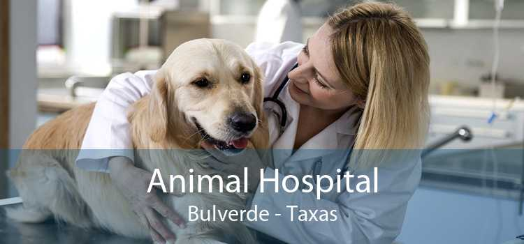 Animal Hospital Bulverde - Taxas