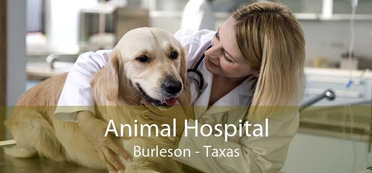 Animal Hospital Burleson - Taxas