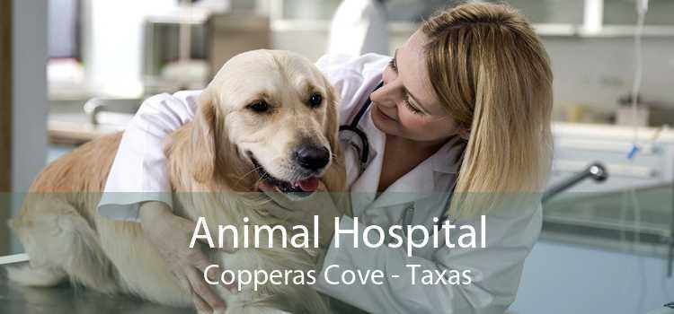 Animal Hospital Copperas Cove - Taxas