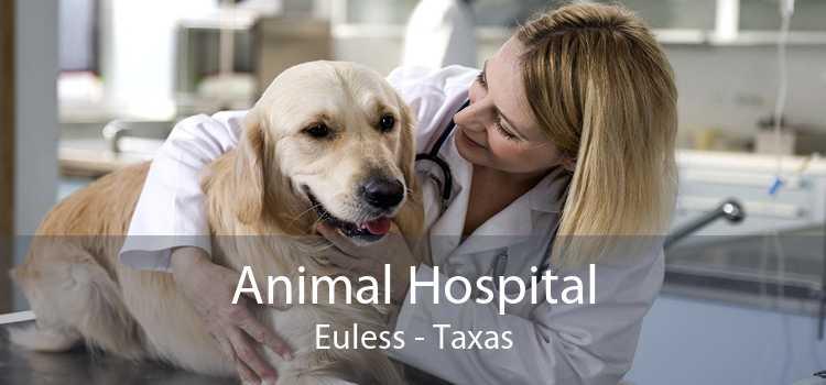Animal Hospital Euless - Taxas