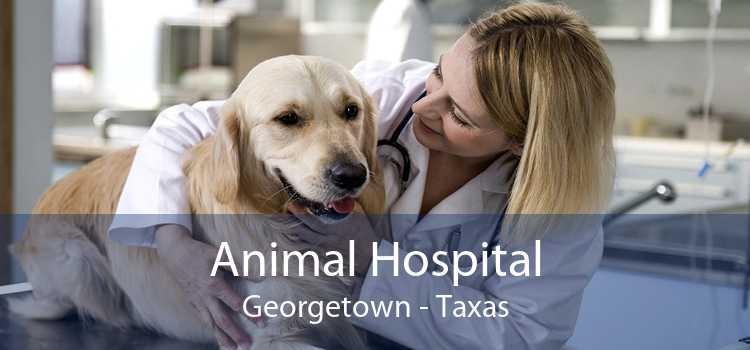 Animal Hospital Georgetown - Taxas