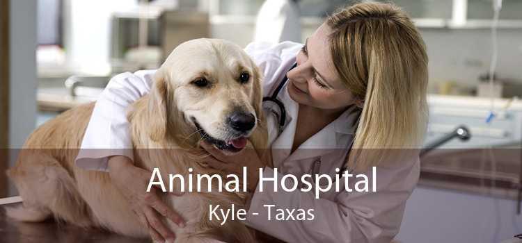 Animal Hospital Kyle - Taxas