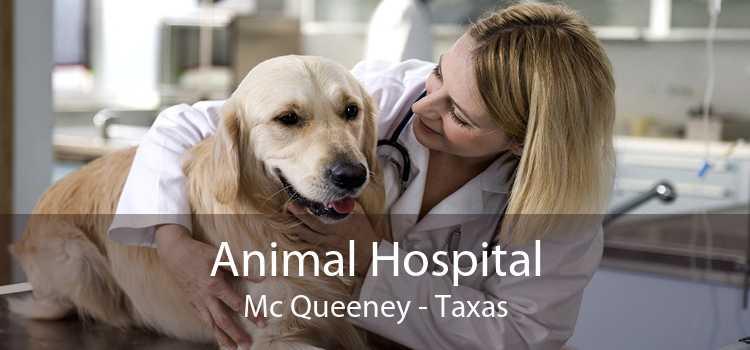 Animal Hospital Mc Queeney - Taxas