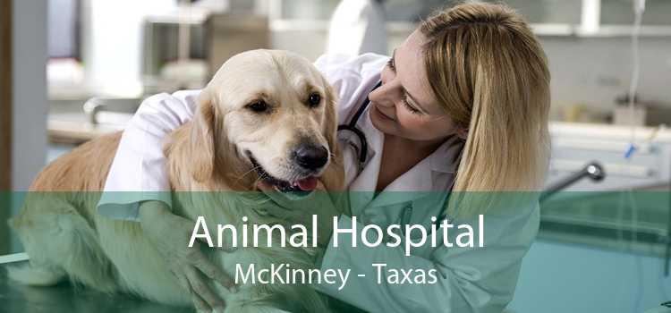 Animal Hospital McKinney - Taxas