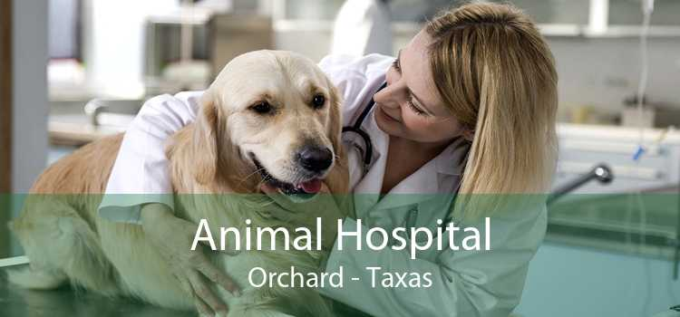 Animal Hospital Orchard - Taxas