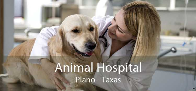 Animal Hospital Plano - Taxas