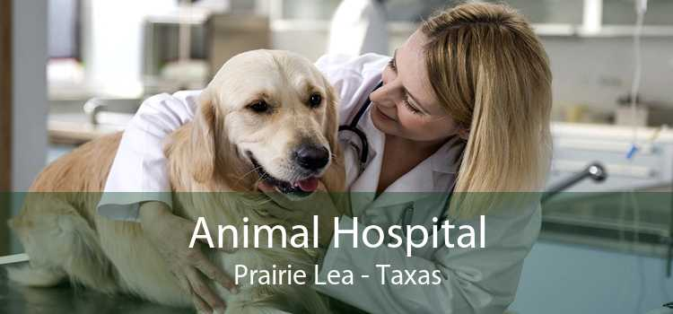 Animal Hospital Prairie Lea - Taxas