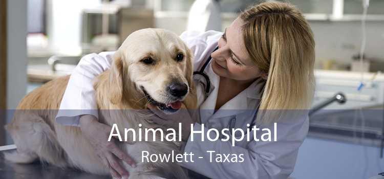Animal Hospital Rowlett - Taxas