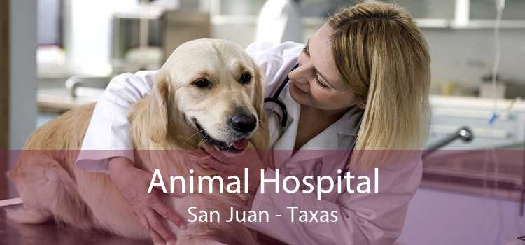 Animal Hospital San Juan - Taxas