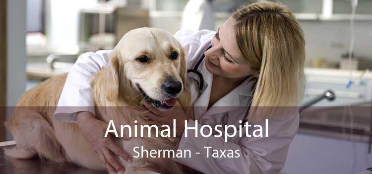 Animal Hospital Sherman - Taxas
