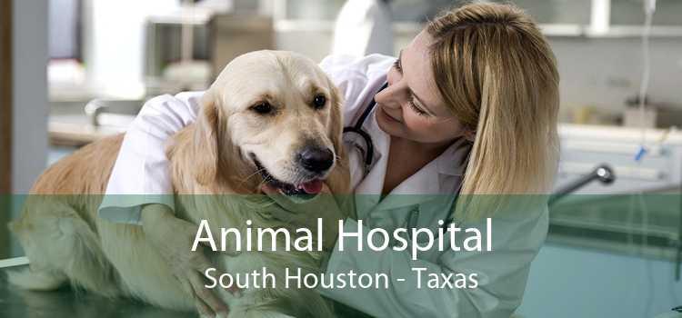 Animal Hospital South Houston - Taxas