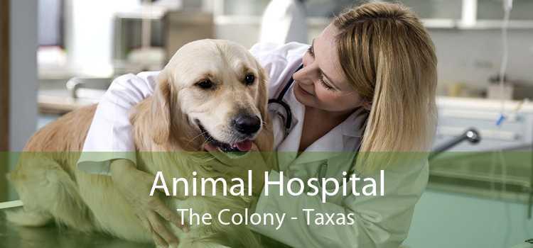 Animal Hospital The Colony - Taxas