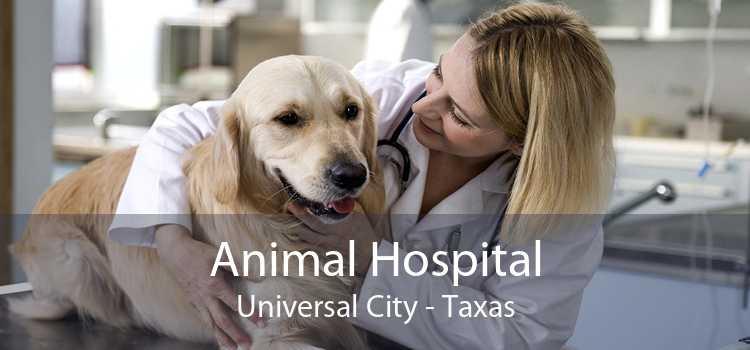 Animal Hospital Universal City - Taxas