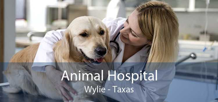 Animal Hospital Wylie - Taxas