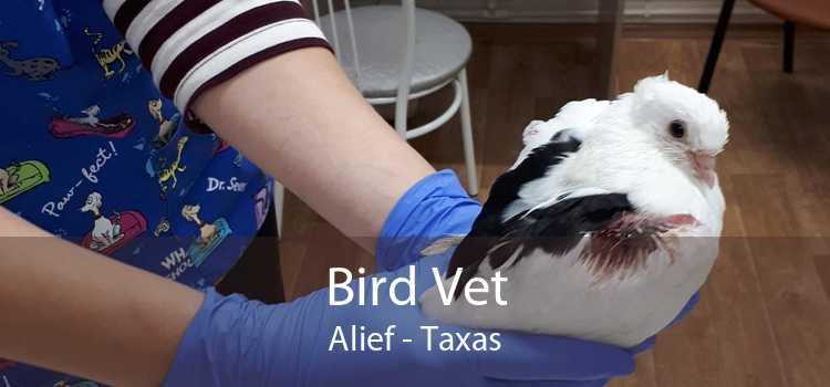 Bird Vet Alief - Taxas