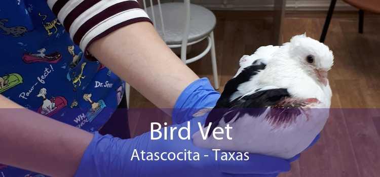 Bird Vet Atascocita - Taxas