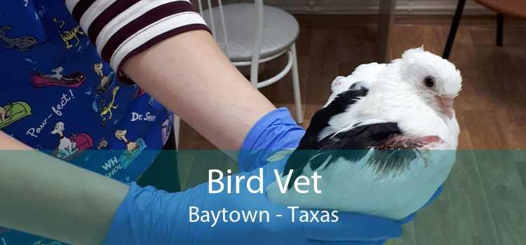 Bird Vet Baytown - Taxas