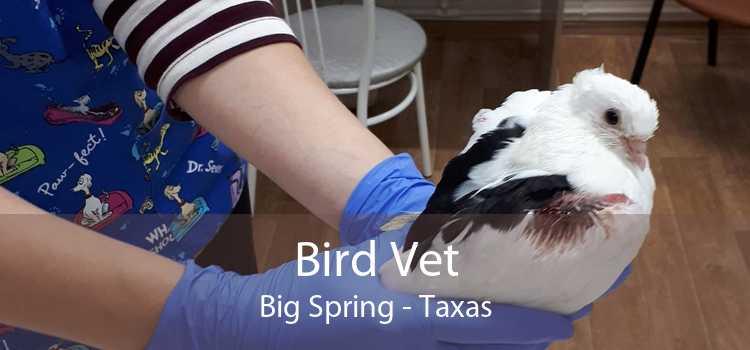 Bird Vet Big Spring - Taxas