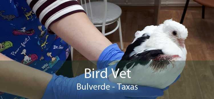 Bird Vet Bulverde - Taxas