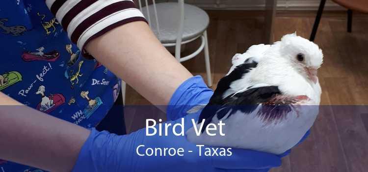 Bird Vet Conroe - Taxas