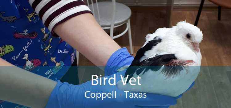 Bird Vet Coppell - Taxas