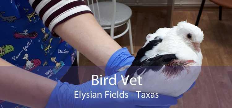 Bird Vet Elysian Fields - Taxas