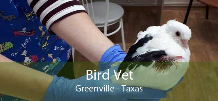 Bird Vet Greenville - Taxas