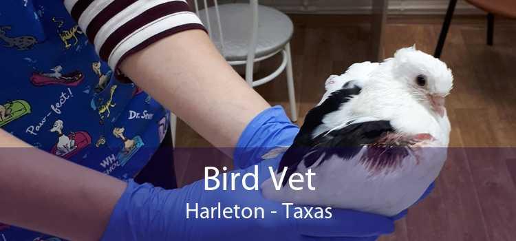Bird Vet Harleton - Taxas