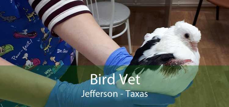Bird Vet Jefferson - Taxas