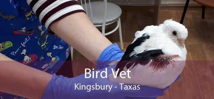 Bird Vet Kingsbury - Taxas