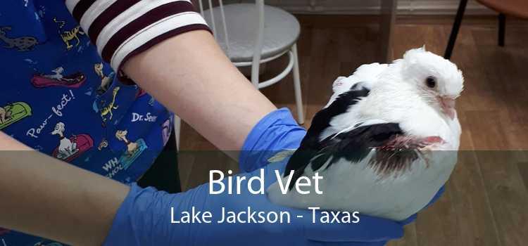 Bird Vet Lake Jackson - Taxas