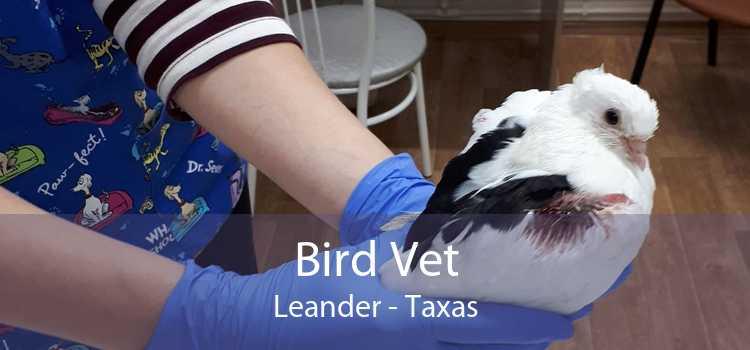 Bird Vet Leander - Taxas
