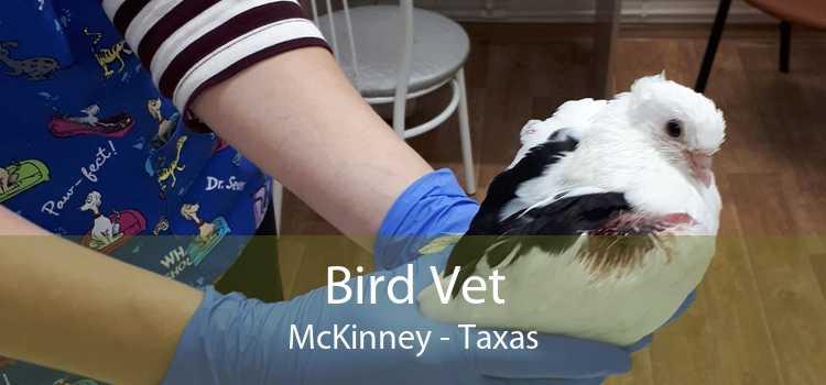 Bird Vet McKinney - Taxas
