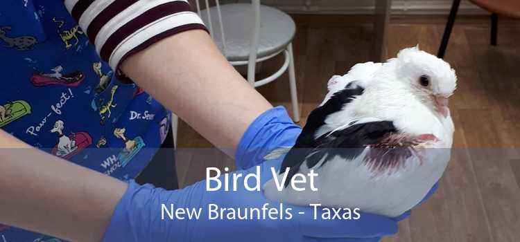 Bird Vet New Braunfels - Taxas