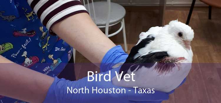 Bird Vet North Houston - Taxas