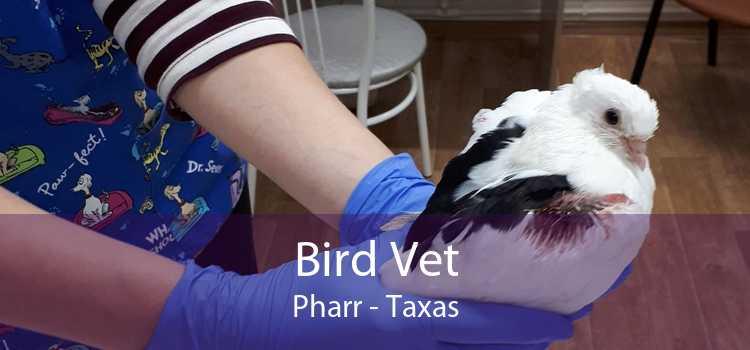 Bird Vet Pharr - Taxas
