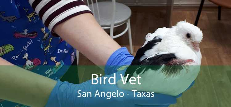 Bird Vet San Angelo - Taxas