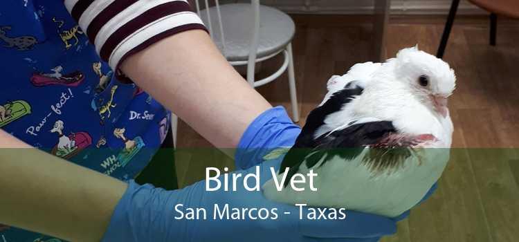 Bird Vet San Marcos - Taxas