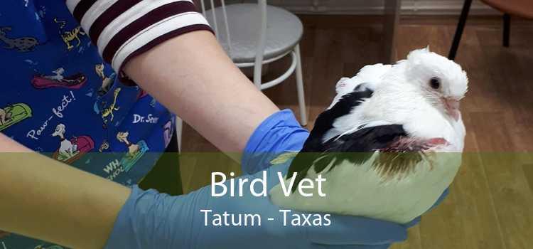 Bird Vet Tatum - Taxas