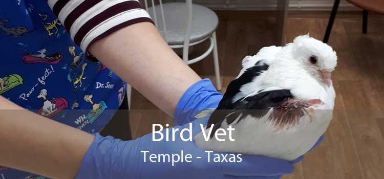Bird Vet Temple - Taxas