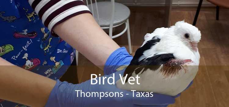 Bird Vet Thompsons - Taxas