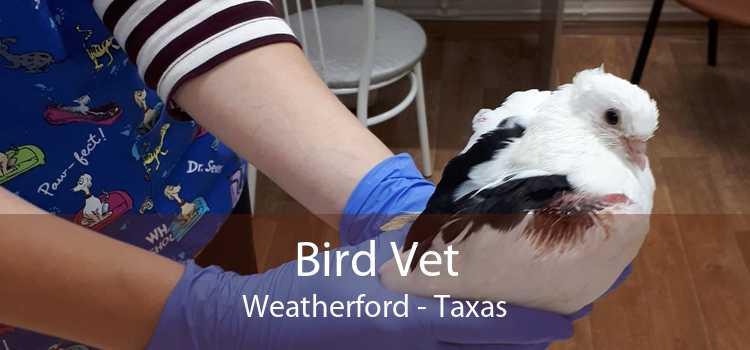 Bird Vet Weatherford - Taxas