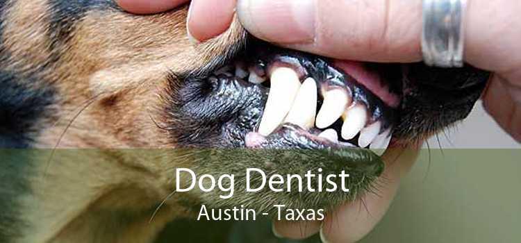 Dog Dentist Austin - Taxas