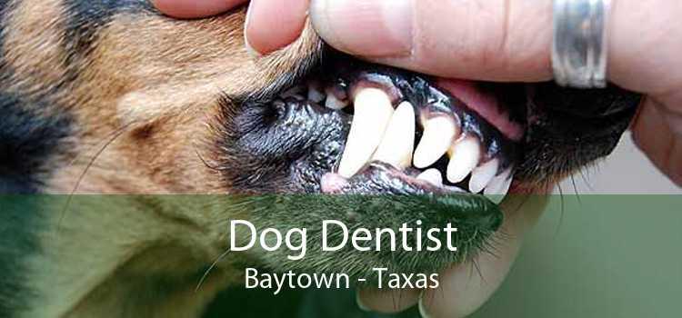 Dog Dentist Baytown - Taxas