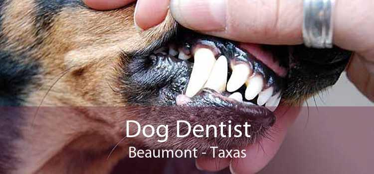 Dog Dentist Beaumont - Taxas