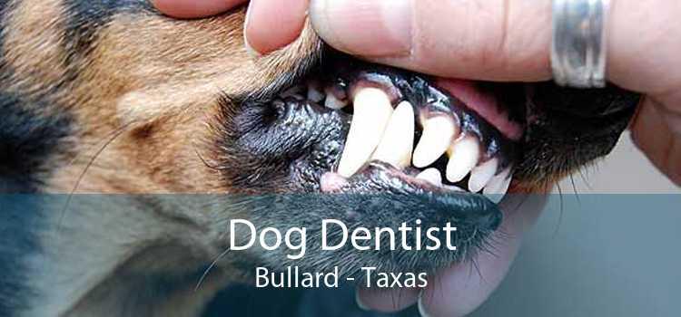 Dog Dentist Bullard - Taxas