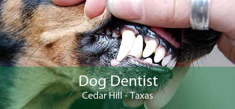 Dog Dentist Cedar Hill - Taxas